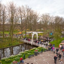 View from the Windmill of the Keukenhof gardens