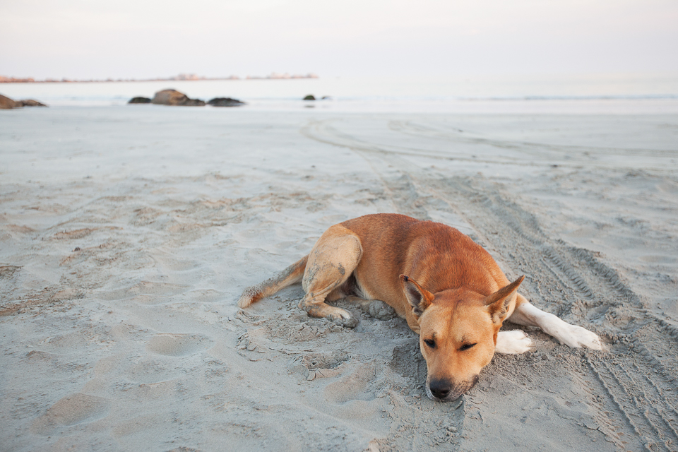A friendly dog that I met while taking photos at Paternoster at sunrise